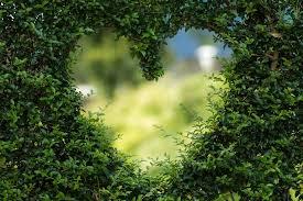 romantic-garden-heart